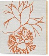 Orange Seaweed Marine Art Furcellaria Fastigiata Wood Print