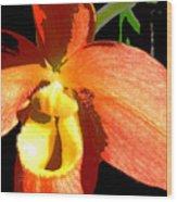 Orange Slipper Orchid Wood Print