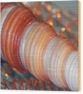 Orange Spiral Shell Wood Print