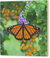 Orange Splendour Wood Print