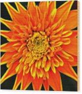 Orange Star Flower Wood Print