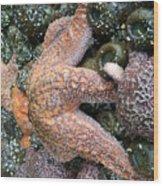 Orange Starfish Wood Print