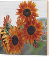 Orange Sunflower 1 Wood Print