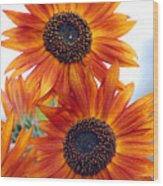 Orange Sunflower 2 Wood Print