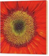 Orange Sunflower Wood Print