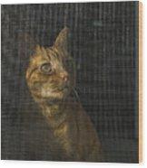 Orange Tabby Cat Looking Wood Print