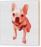 Orange Terrier Wood Print
