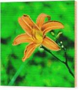 Orange Tiger Lily Wood Print