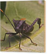 Orange Tipped Antennae Wood Print