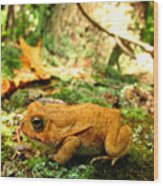 Orange Toad Wood Print
