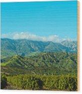 Orange Tree Grove, Santa Paula, Ventura Wood Print