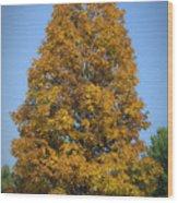 Orange Tree Pipestem Short Course Wood Print