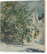 Orange Trees And Gate Wood Print