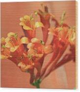 Orange Trumpet Honeysuckle Wood Print