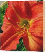 Orange Trumpeting Lily Wood Print