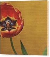 Orange Tulip 2 Wood Print