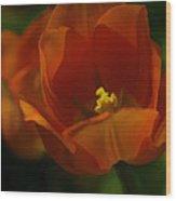 Orange Tulip Art Wood Print
