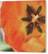 Orange Tulip Bloom Wood Print