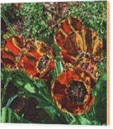Orange Tulip Chrome Wood Print