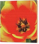 Orange Tulip Flowers In Spring Garden Wood Print