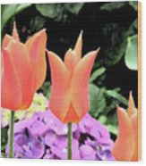 Orange Tulip Painting  Wood Print