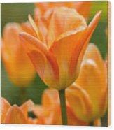 Orange Tulips 2 Wood Print