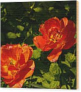 Orange Tulips In My Garden Wood Print