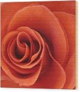 Orange Twist Rose 5 Wood Print