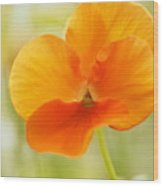 Orange Viola On A Brilliant Spring Day Wood Print