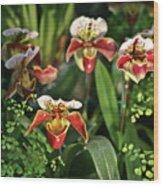 Orange White Orchid Wood Print