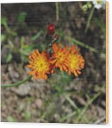 Orange Wild Flowers Wood Print