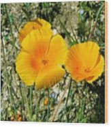 Orange Wildflowers Wood Print