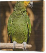 Orange-winged Amazon Parrot Wood Print by Adam Romanowicz