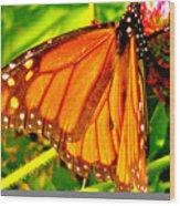 Orange Winged Butterfly Wood Print