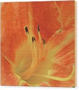 Orange-yellow Daylily Wood Print