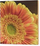 Orange Yellow Gerbera Wood Print