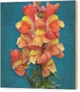 Orange Yellow Snapdragon Flowers Wood Print
