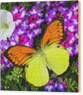 Orange Yellow Wings Wood Print
