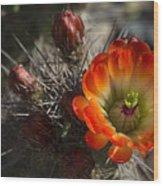 Orange You A Hedgehog  Wood Print