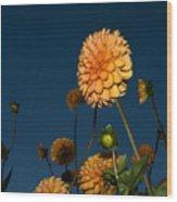 Orange Zinnias Wood Print