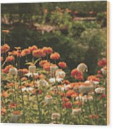 Orangeade Wood Print