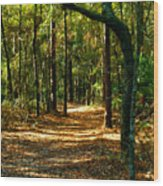 Orangedale Path Wood Print