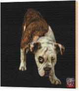 Orangeenglish Bulldog Dog Art - 1368 - Bb Wood Print