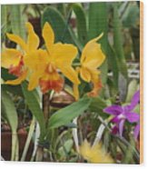 Orangepurple Orchids Wood Print
