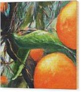 Oranges Extract Wood Print