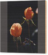 Orange Roses In Sun With Water Droplets Wood Print