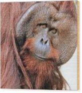 Orangutan Male Closeup Wood Print