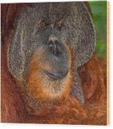 Orangutan Male Wood Print