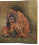Orangutan Monkey Wood Print