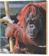 Orangutan Smile Wood Print